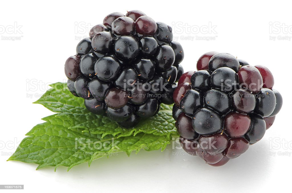 Close-up of two fresh and ripe blackberries stock photo