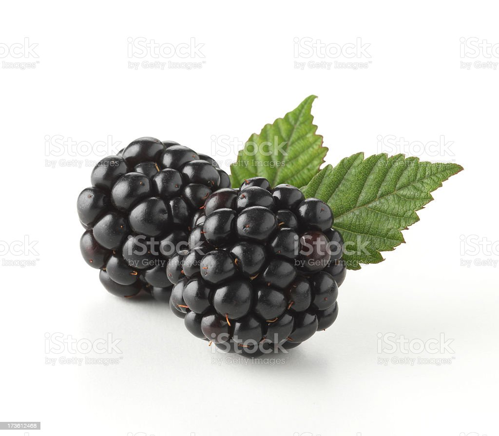 Close-up of two fresh blackberry with leaves stock photo