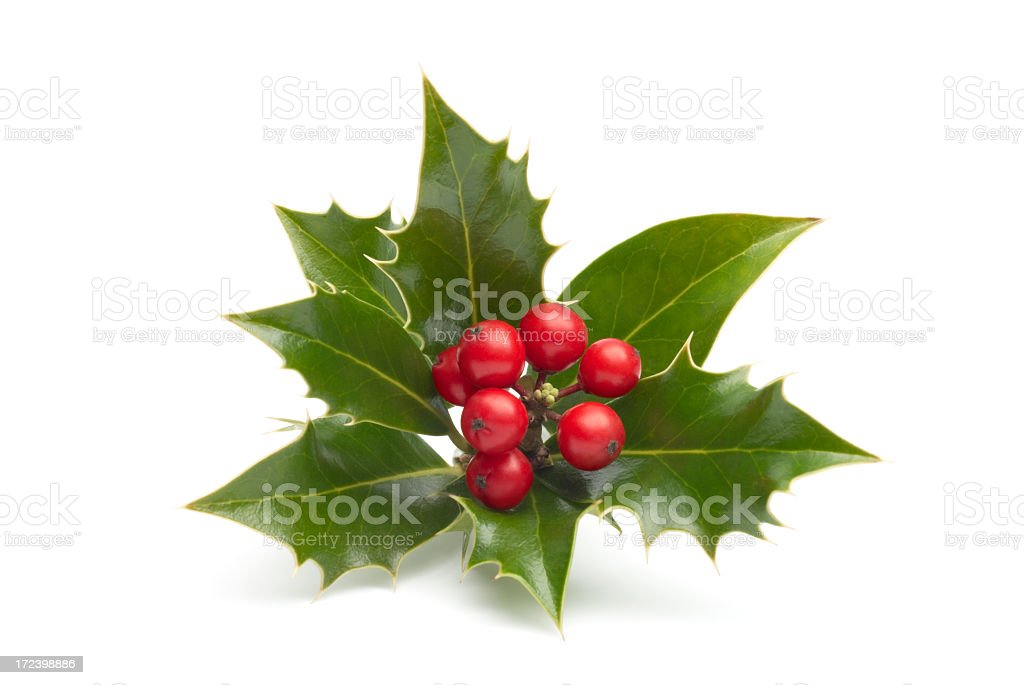 Close-up of vividly colored holly isolated in white royalty-free stock photo