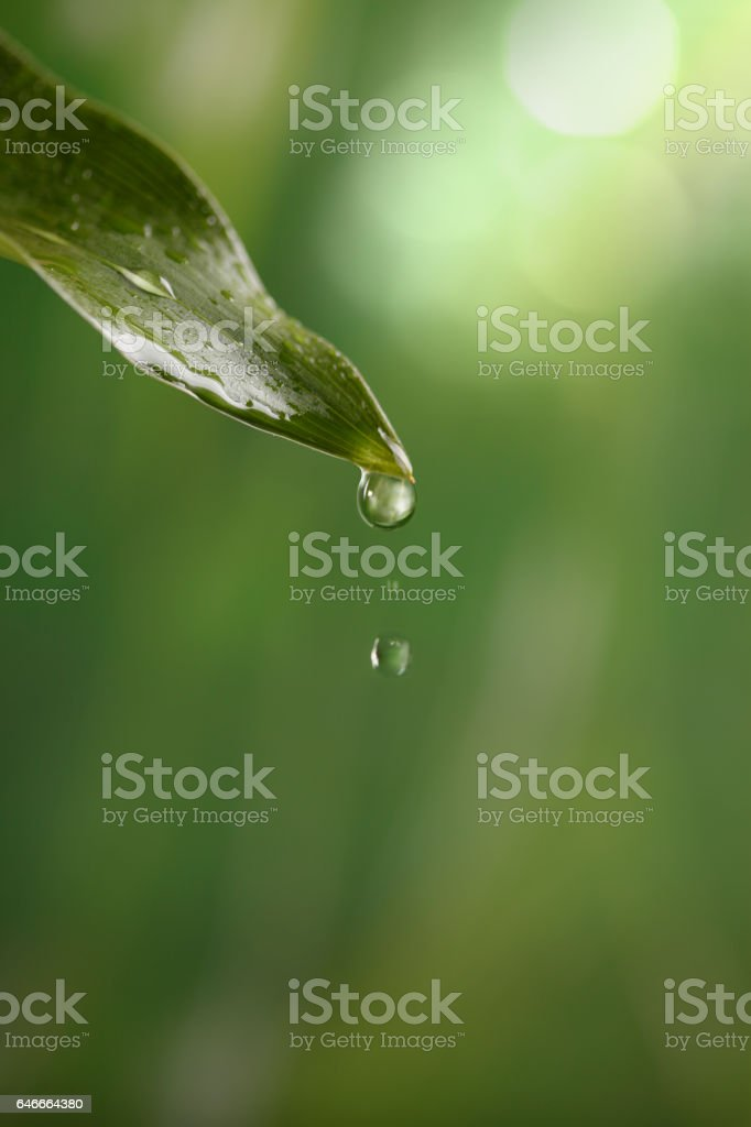 Close-Up Of Water Drops On Leaf stock photo