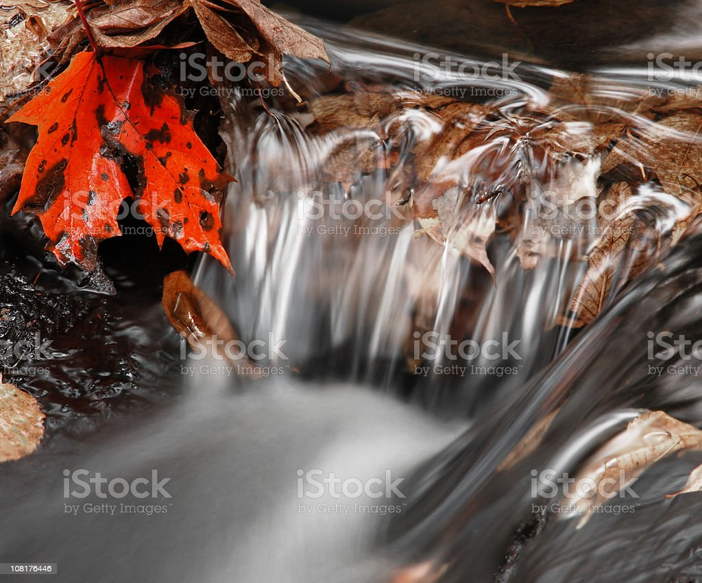 Close-up of Waterfall with Autumn Leaves stock photo