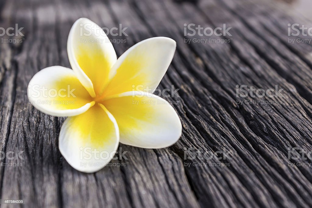 Close-up of white and yellow Plumeria on dark wooden surface stock photo