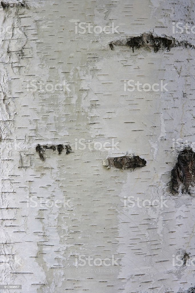 Closeup of White Birch Texture Background royalty-free stock photo