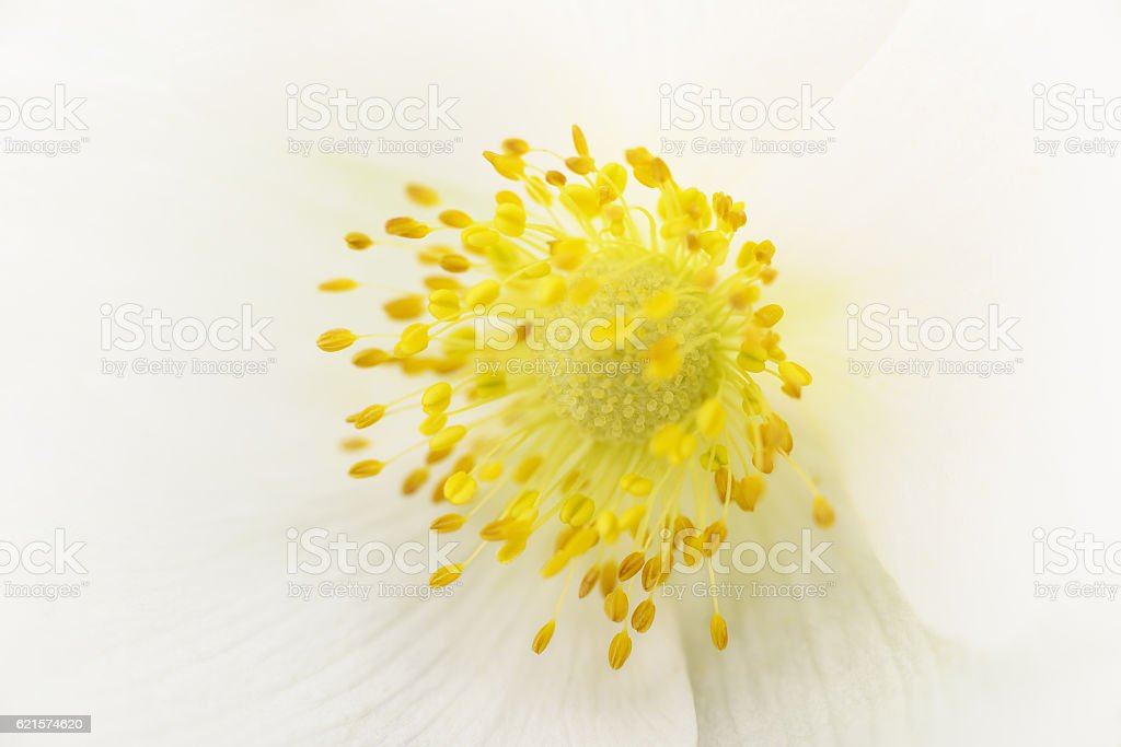 Closeup of white flower. stock photo
