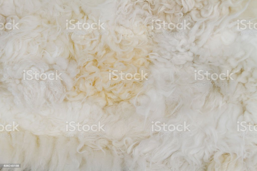 Close-up of white sheep woolen fur stock photo