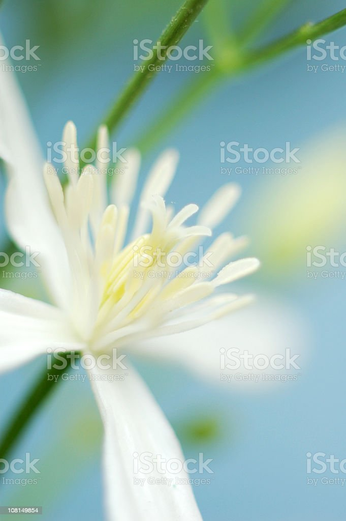 Close-up of White Tropical Flower royalty-free stock photo