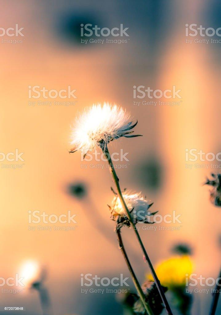 Closeup of wildflower stock photo