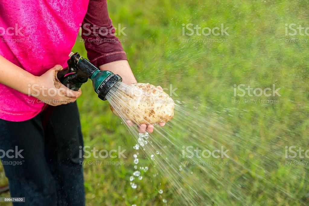Close-Up of Young Girl Cleaning Freshly Dug Organic Potato stock photo