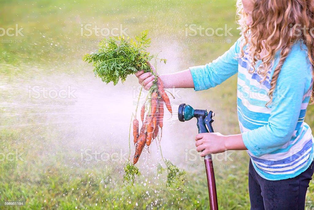 Close-Up Of Young Girl Washing Freshly Dug Organic Carrots stock photo