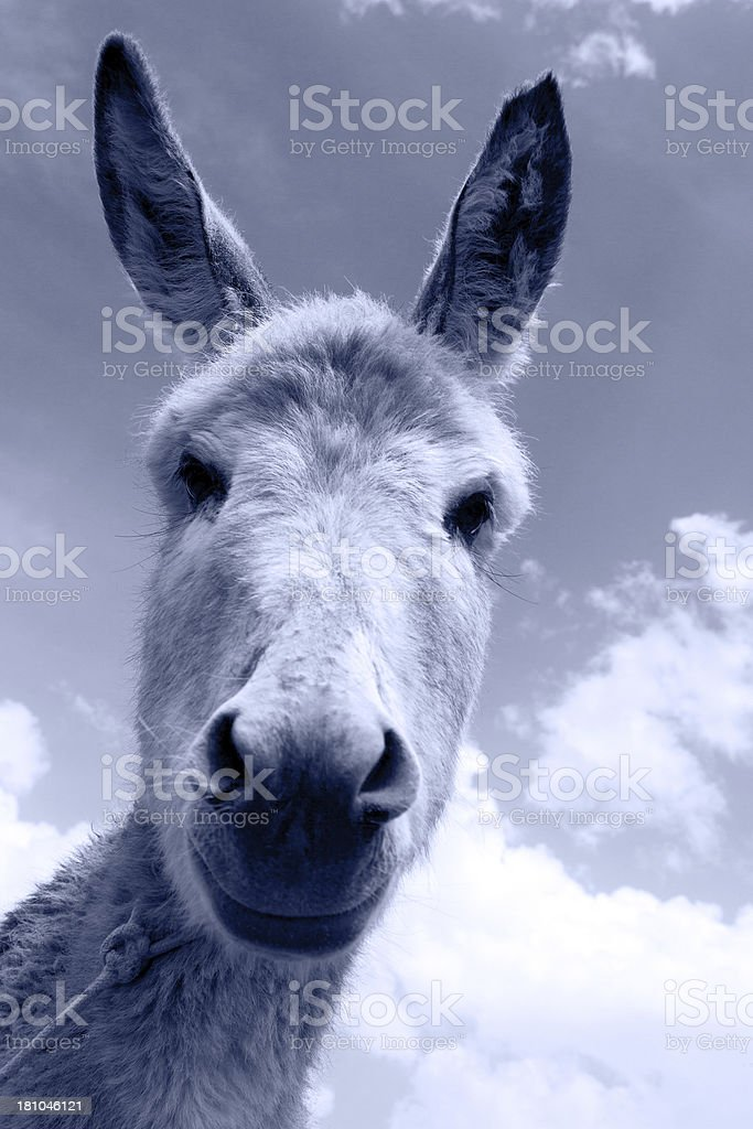 Close-up on a donkey foal's head royalty-free stock photo