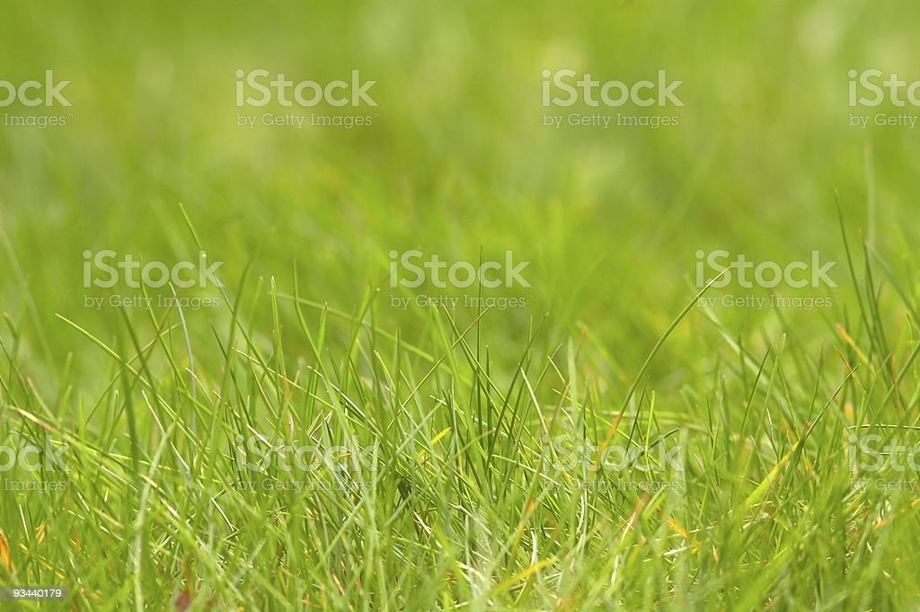 Close-up on fresh green grass royalty-free stock photo