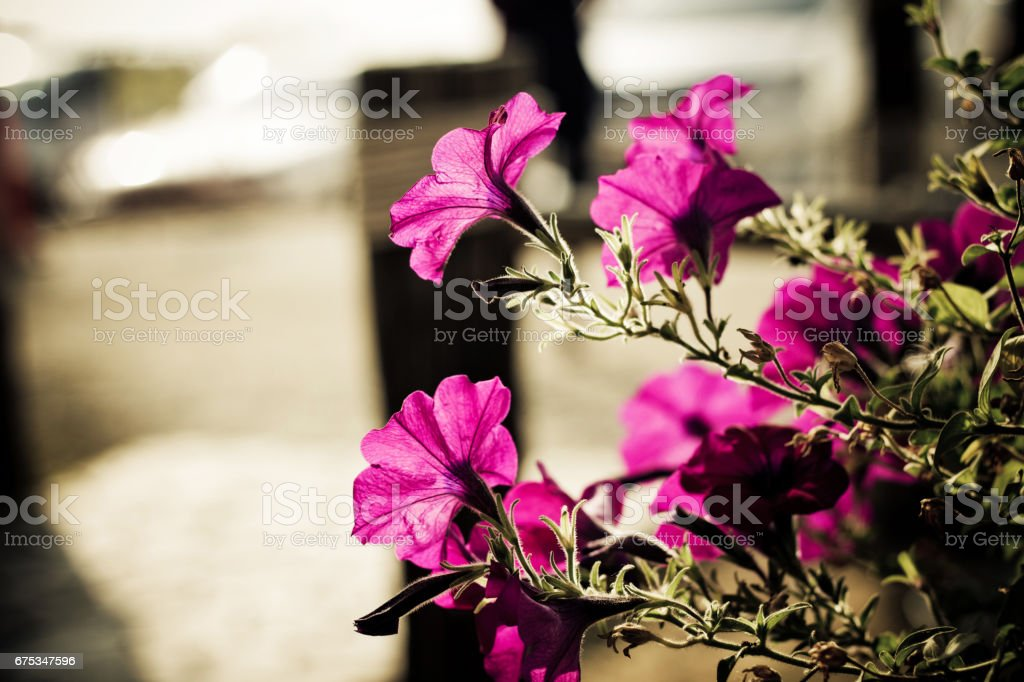 Closeup on pink flower with siluate stock photo