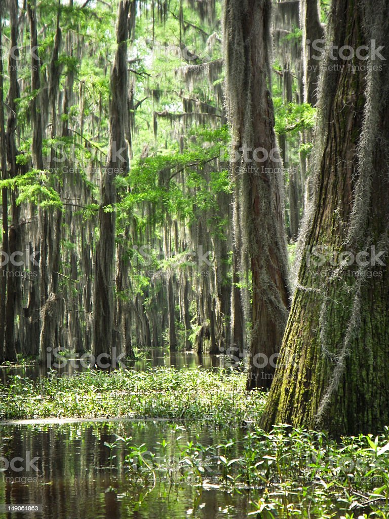 Close-up on the Bayou royalty-free stock photo