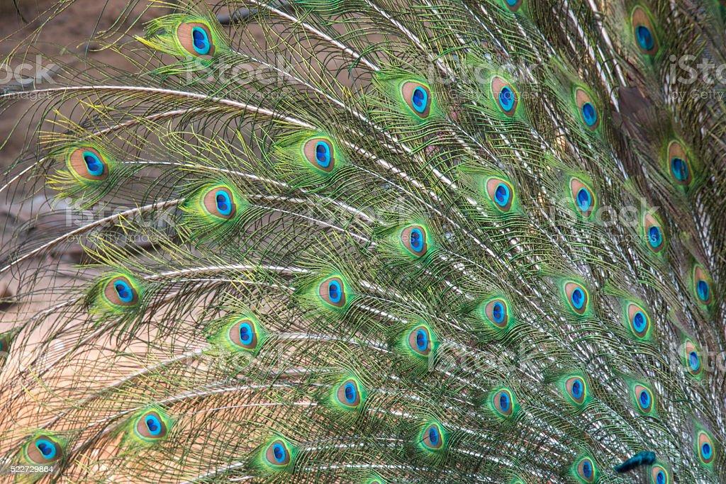 gros plan de plumes de canard photo libre de droits