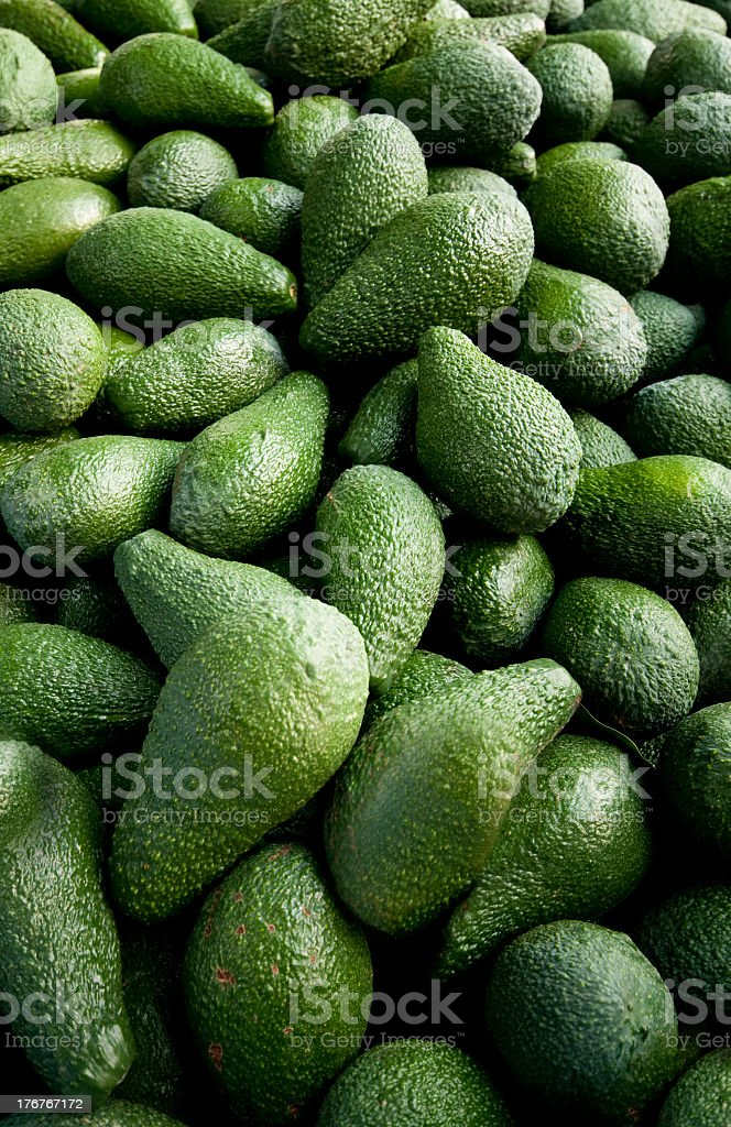 Close-up photo green avocado harvest royalty-free stock photo