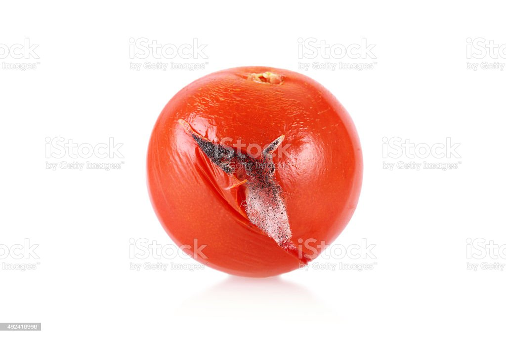 Closeup photo of a moldy tomato stock photo