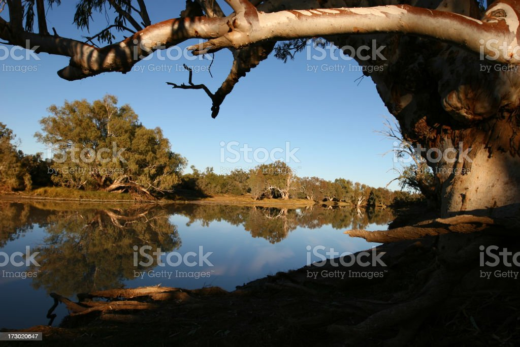 Close-up photo of a tree branch hanging over a river stock photo