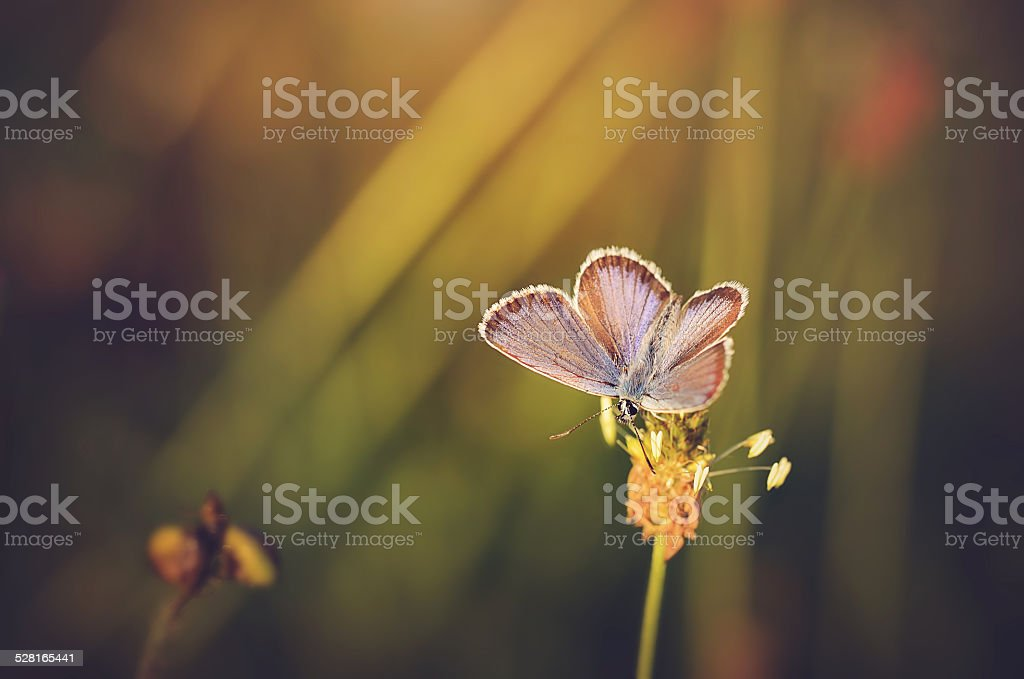 Closeup photo of an amazing butterfly stock photo