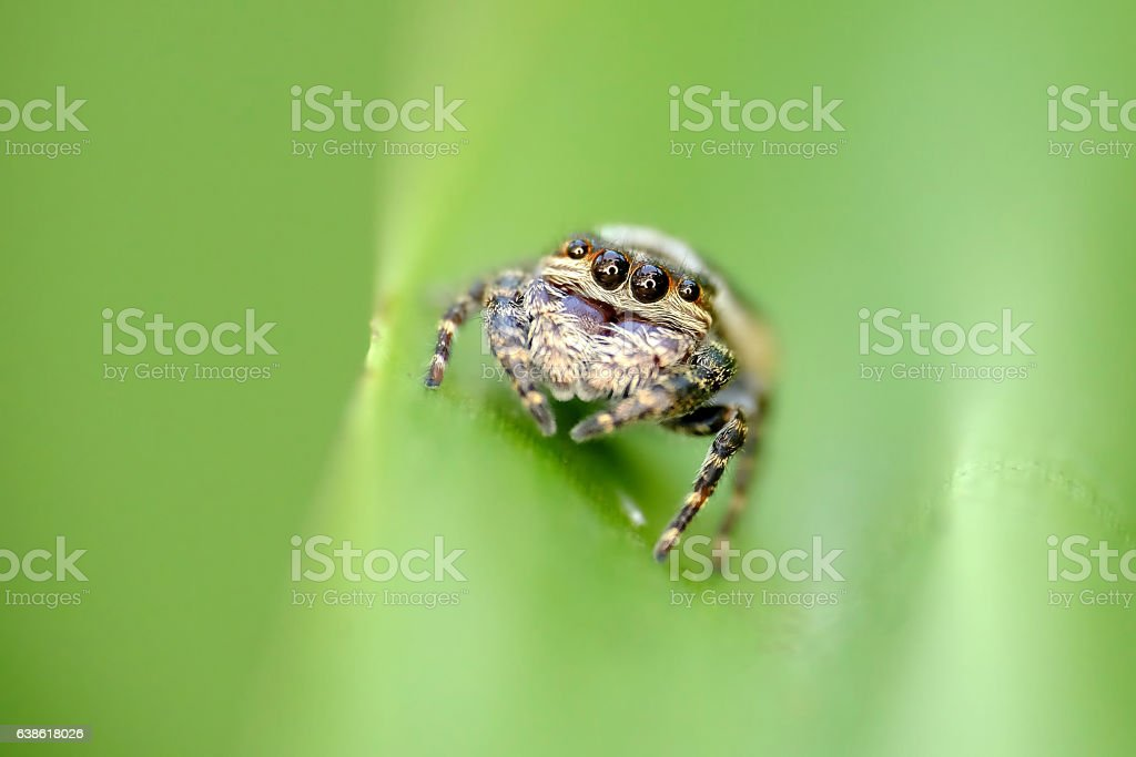 Closeup photo of little brown spider stock photo
