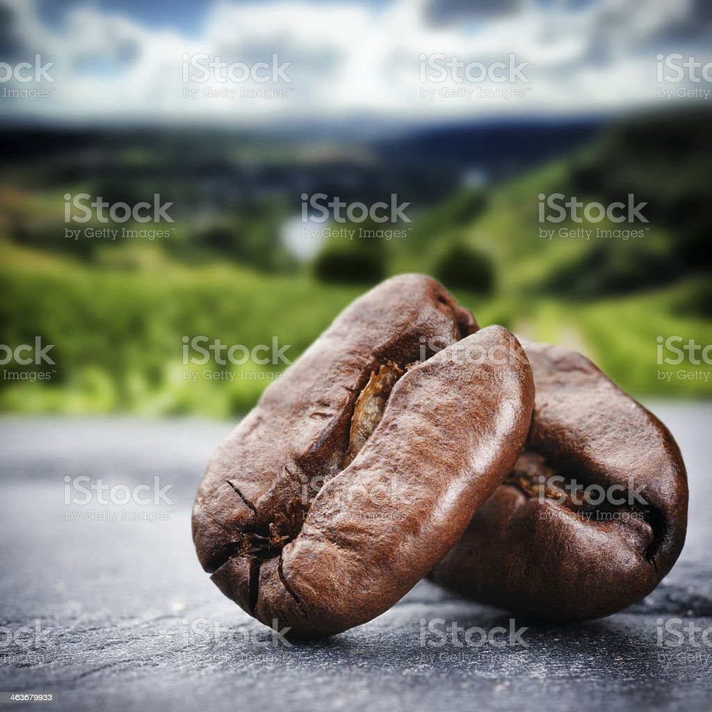 Close-up photograph of coffee beans stock photo