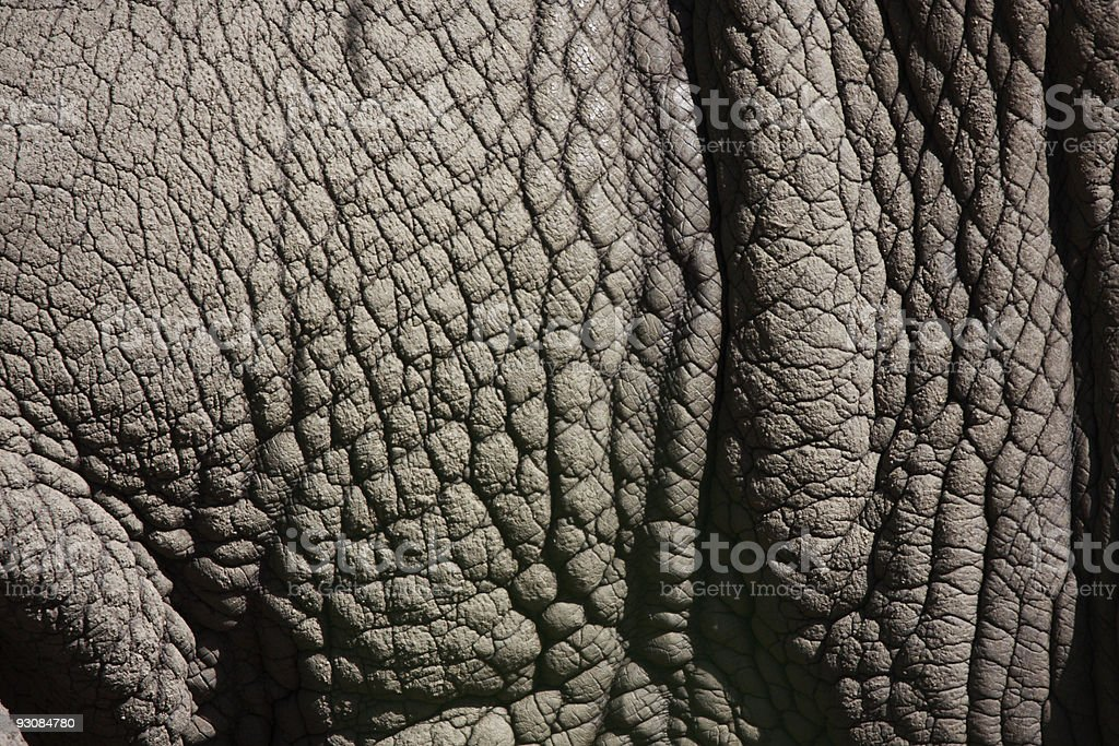 A close-up photograph of gray wrinkled elephant hide stock photo