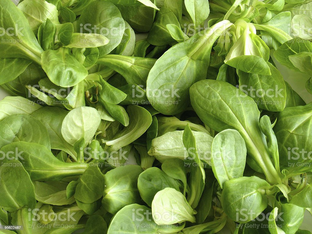 Close-up picture of green leaves royalty-free stock photo