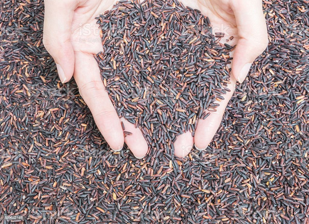 Closeup pile of black rice called riceberry on woman hands stock photo