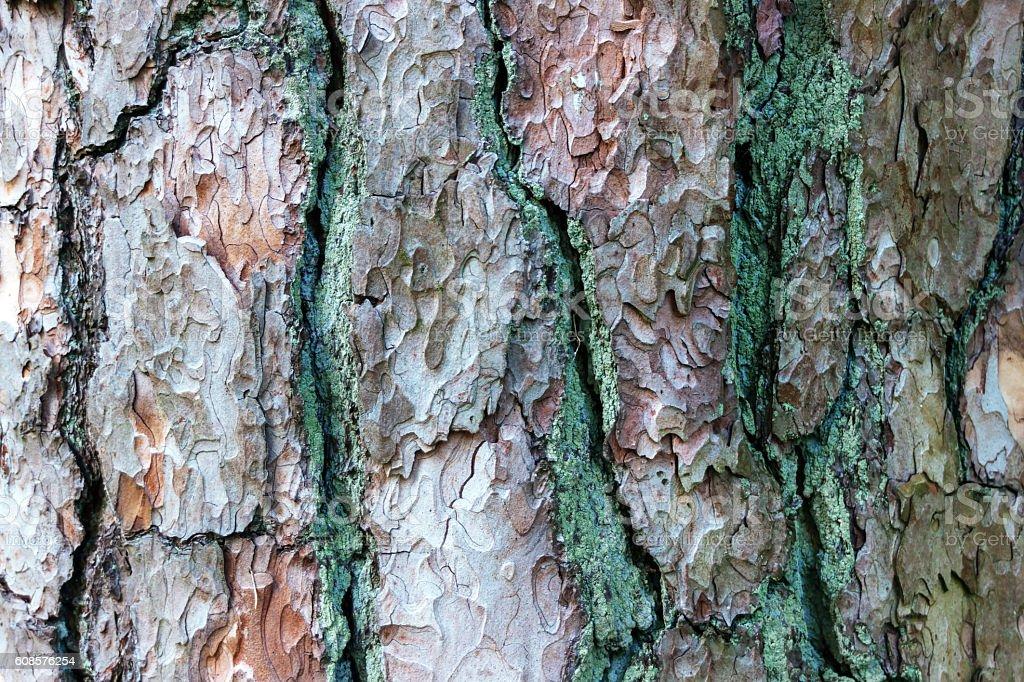 Closeup pine bark background stock photo