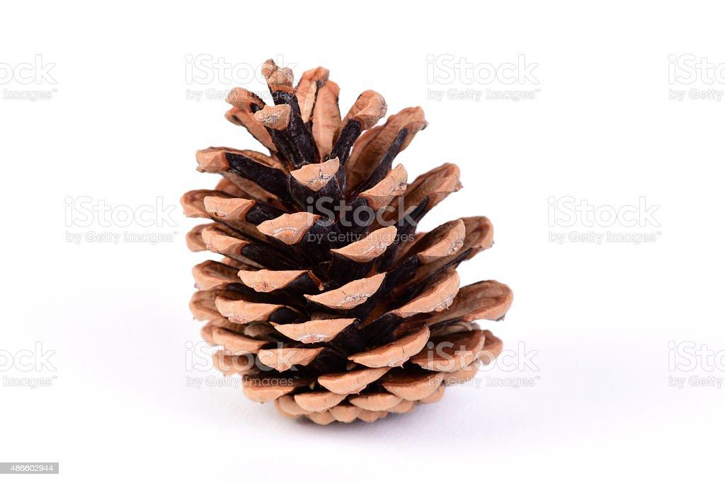 Close-up Pine Cone stock photo