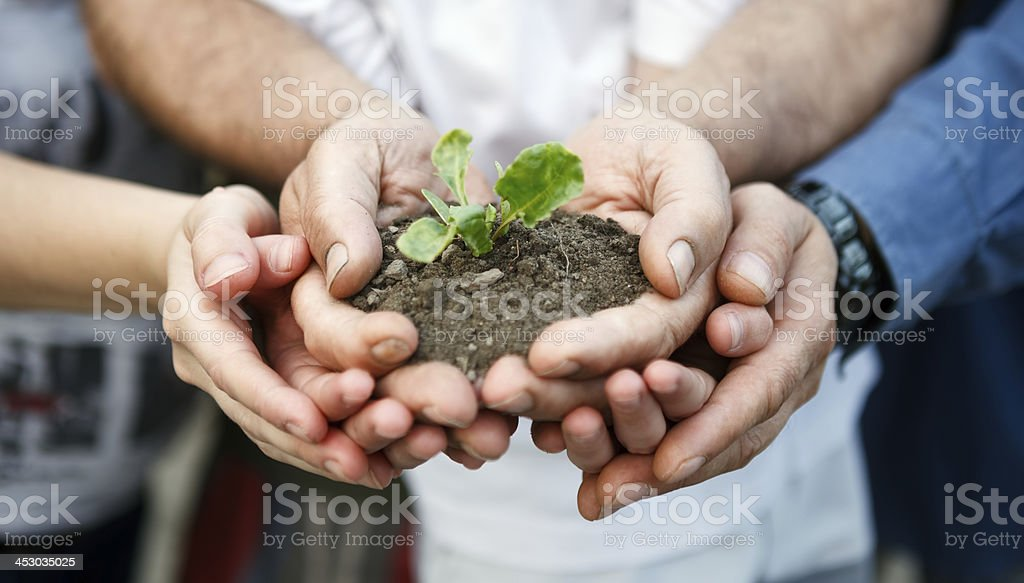 Close-up plant in hands showing people care about new life stock photo