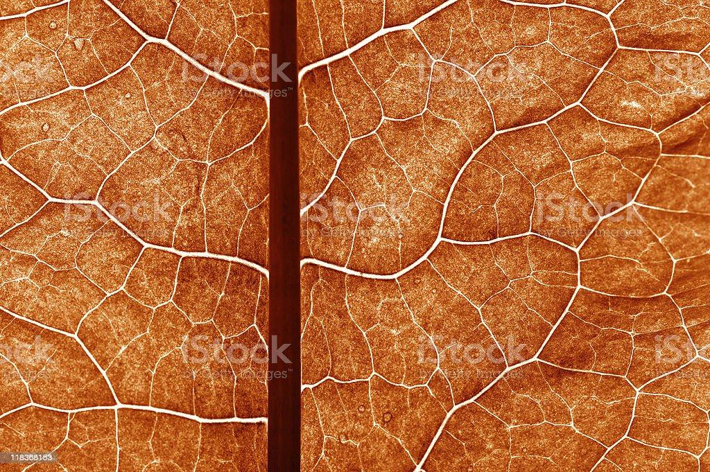 closeup plant texture background royalty-free stock photo
