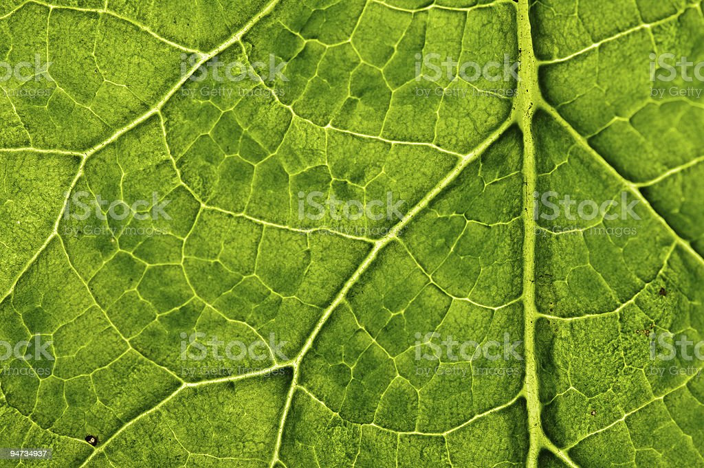 closeup plant texture background royalty-free stock photo