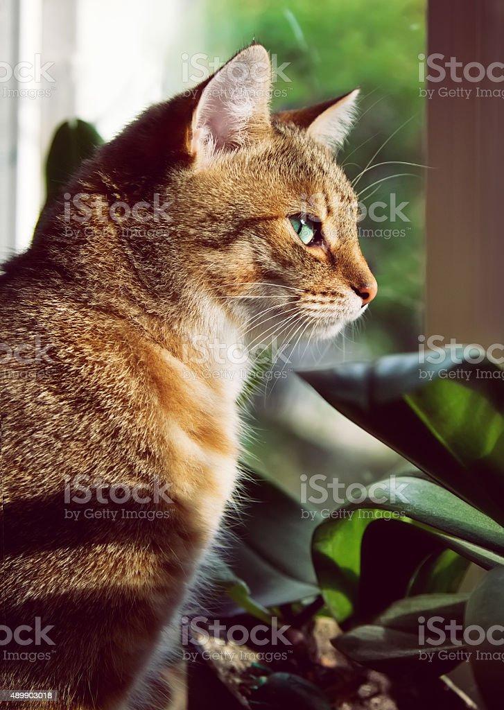 Close-up portrait of a beautiful domestic cat stock photo