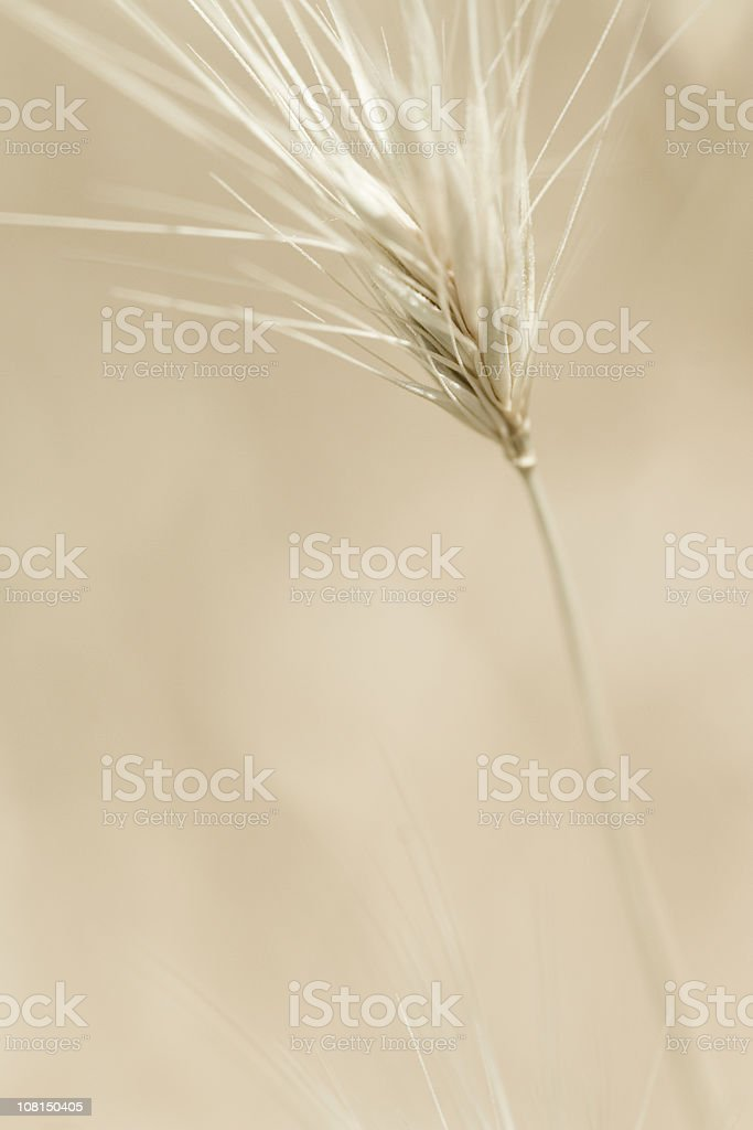 Close-Up Portrait of Desert Plant royalty-free stock photo