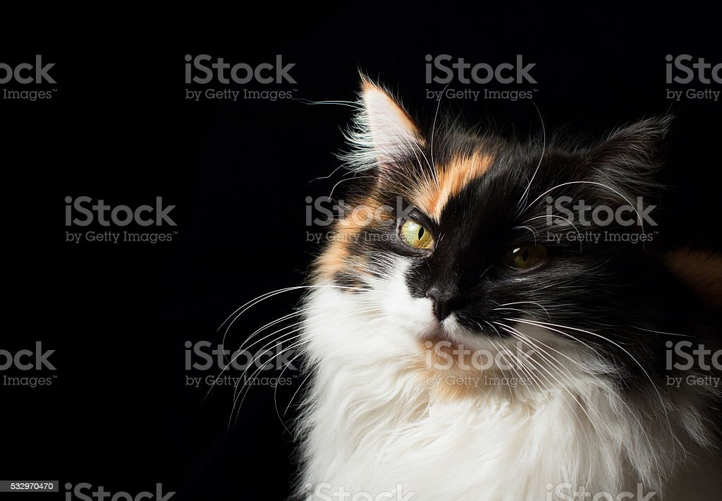 Close-up portrait of spotted cat. stock photo