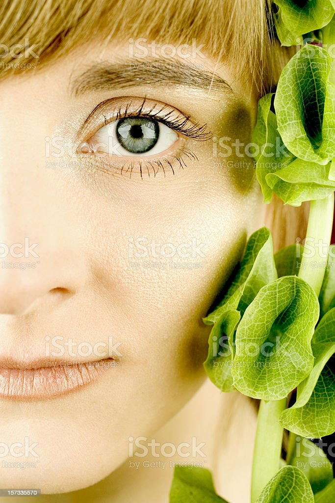Close-up Portrait with Shell flower (Molucella laevis) stock photo