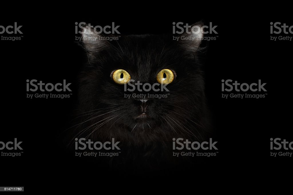Closeup Scared Black Cat Face, Yellow Eyes in Dark stock photo