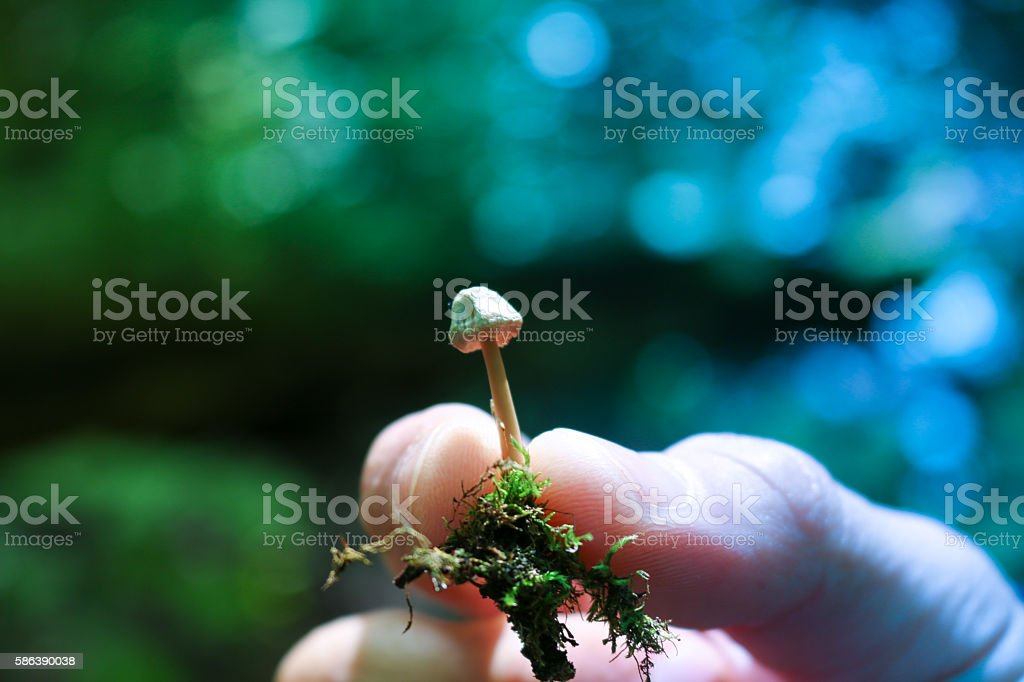 Closeup shot of a boletus mushroom growing in the forest. stock photo