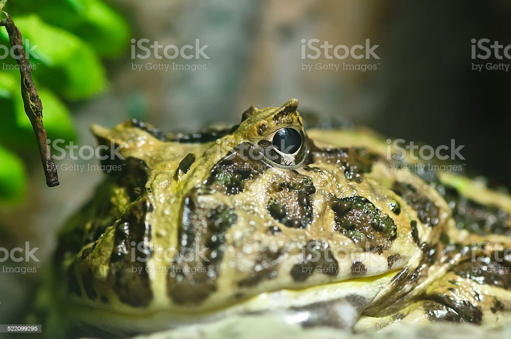 Close-up shot of a  frog stock photo