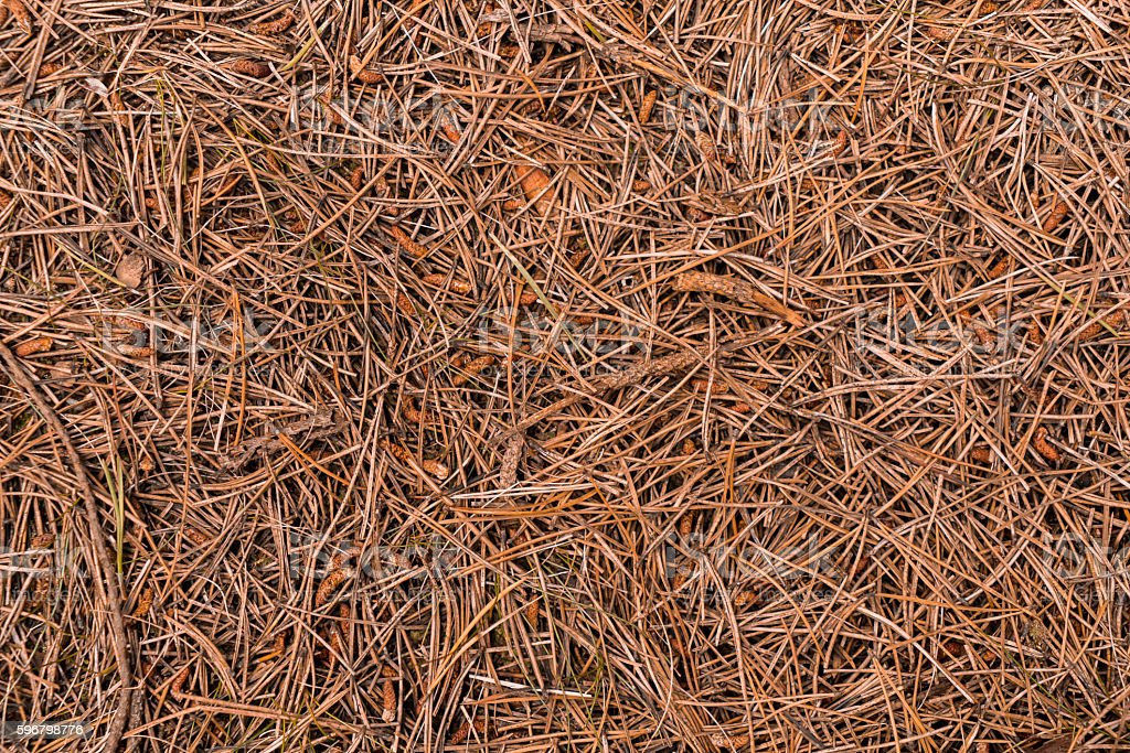 Close-up shot of a pattern made out of fir needles stock photo