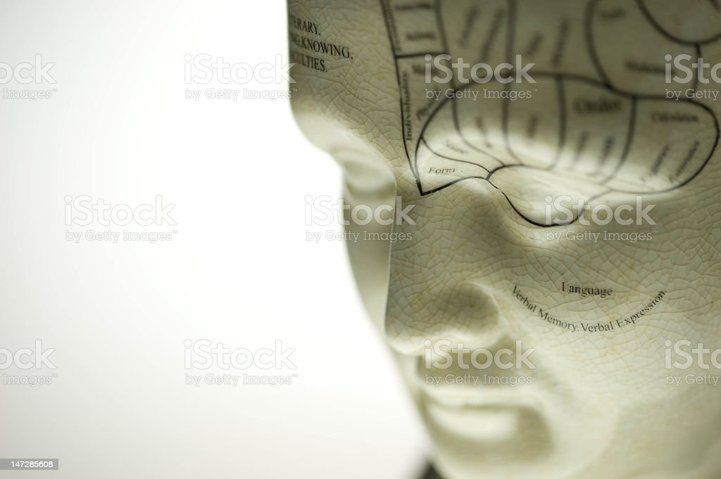 Close-up shot of a sculpture showing phrenology elements royalty-free stock photo