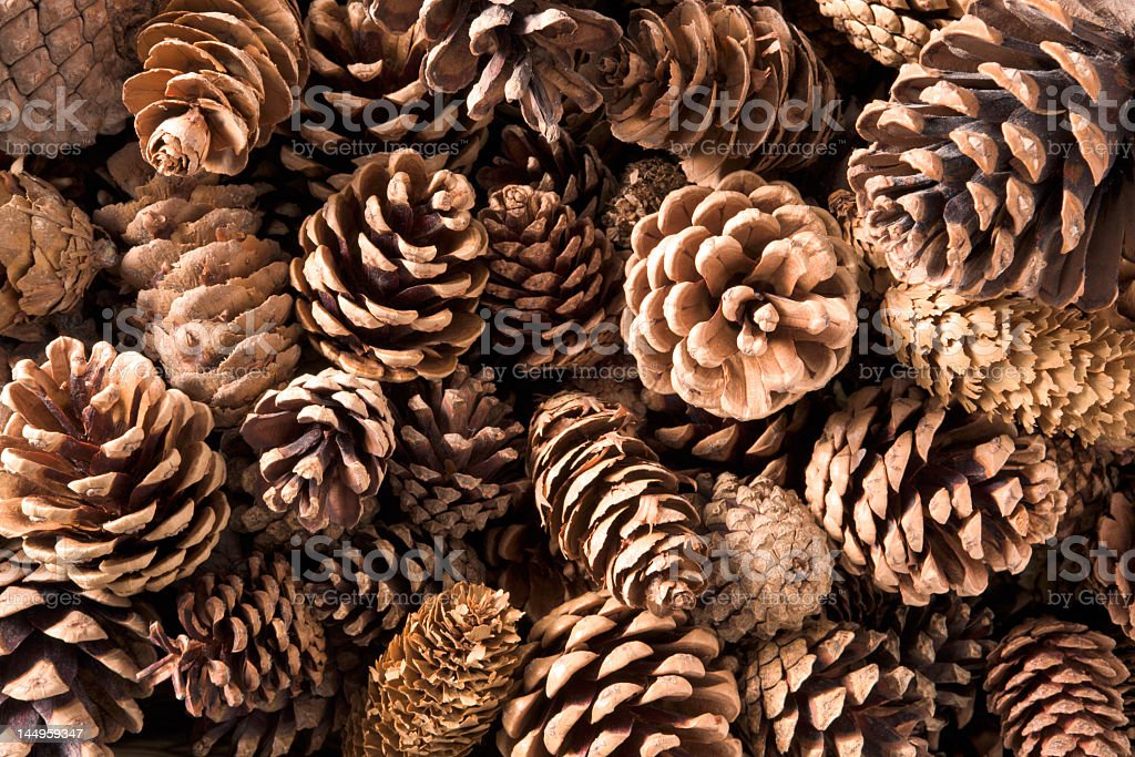 Close-up shot of numerous pine cones stock photo