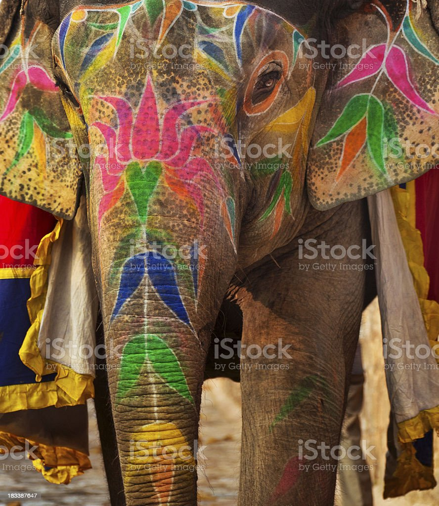 Close-up shot of painted Indian elephant royalty-free stock photo