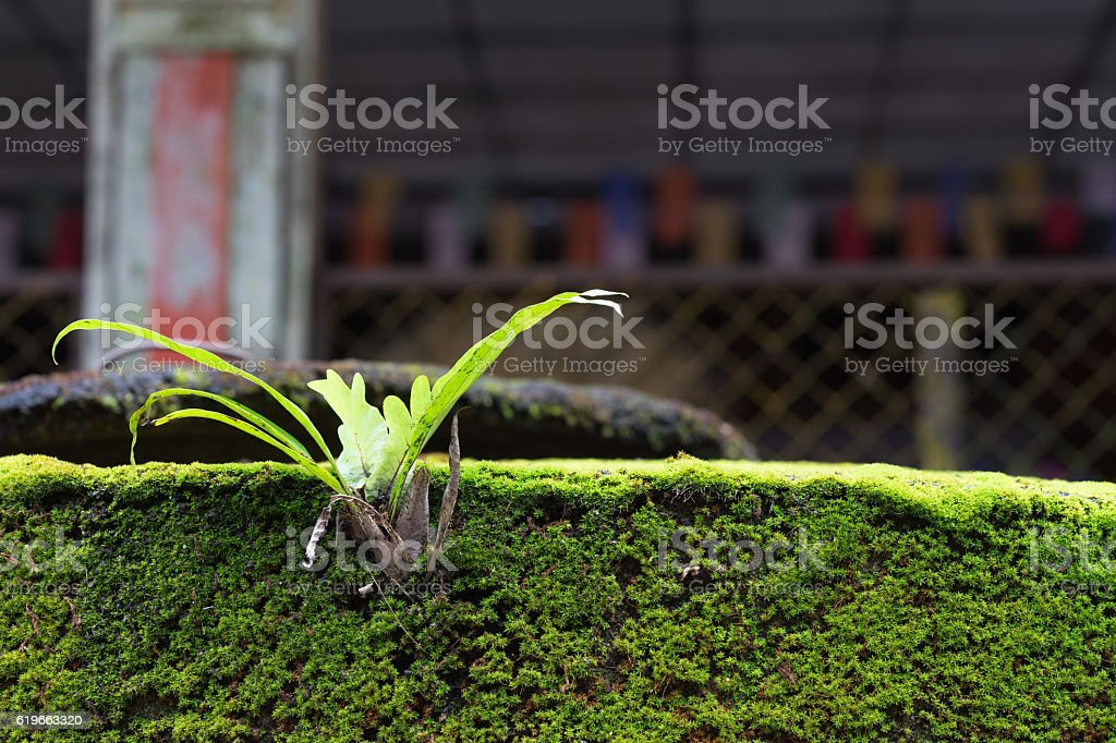 Closeup small trees depend on the weeds royalty-free stock photo