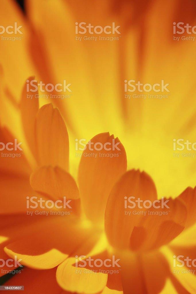 Close-up soft focus flower stock photo