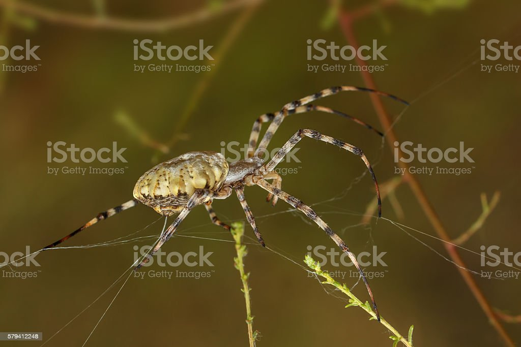 Closeup Spider spinning a web among the grass stock photo