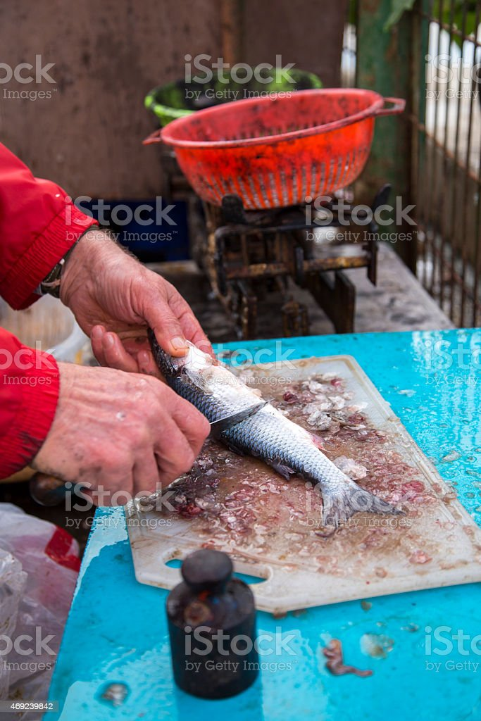 Closeup to fisherman hands cleaning the fresh sea bass fish stock photo