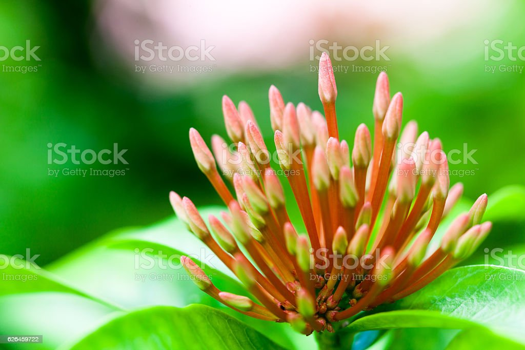 Close-up tropical flower stock photo
