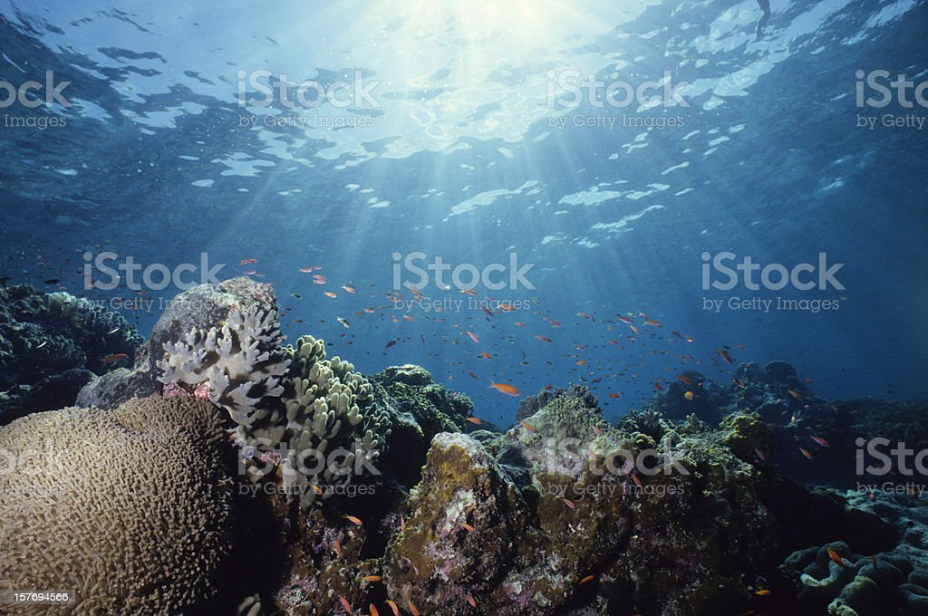 Close-up underwater shot of a colorful reef stock photo