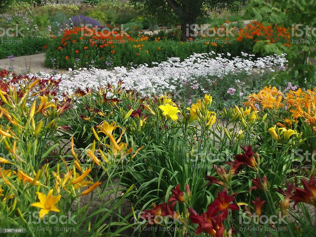Closeup view of a colorful garden royalty-free stock photo